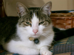 Cat Winston – He was trapped. Very grateful to the team of Happy Tails.
